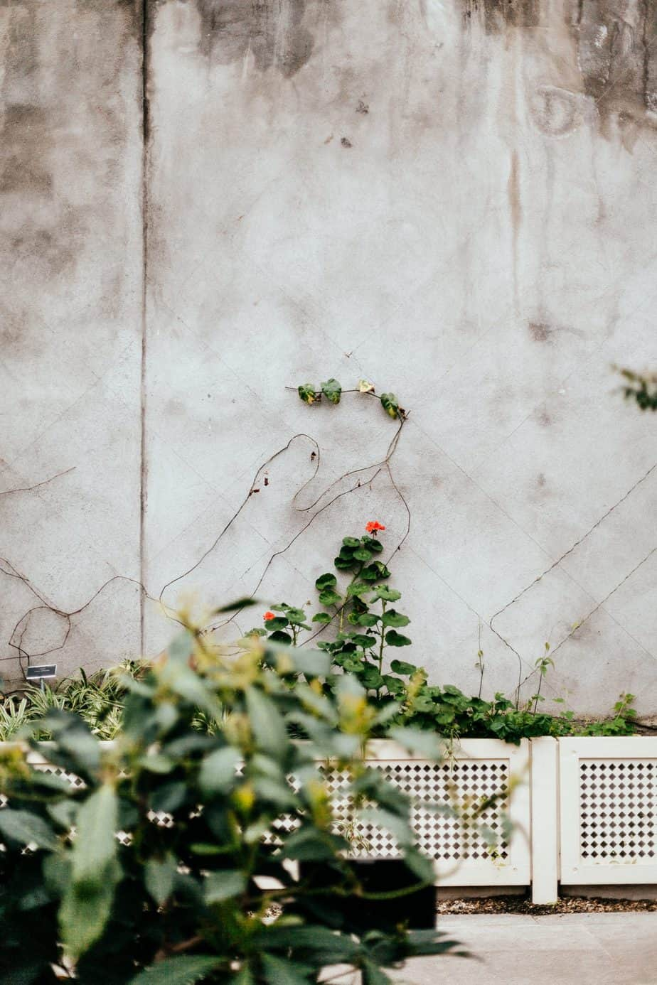 Back Garden Concrete Flooring