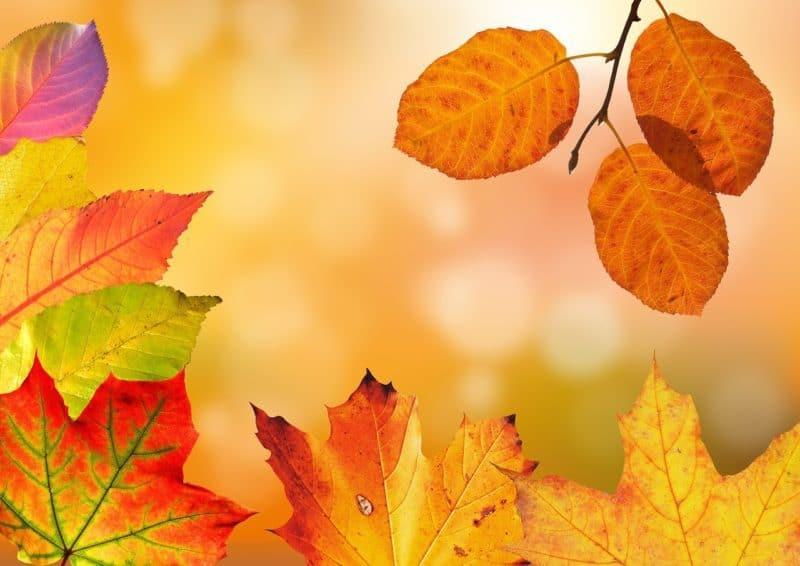autumn-1649362_1280