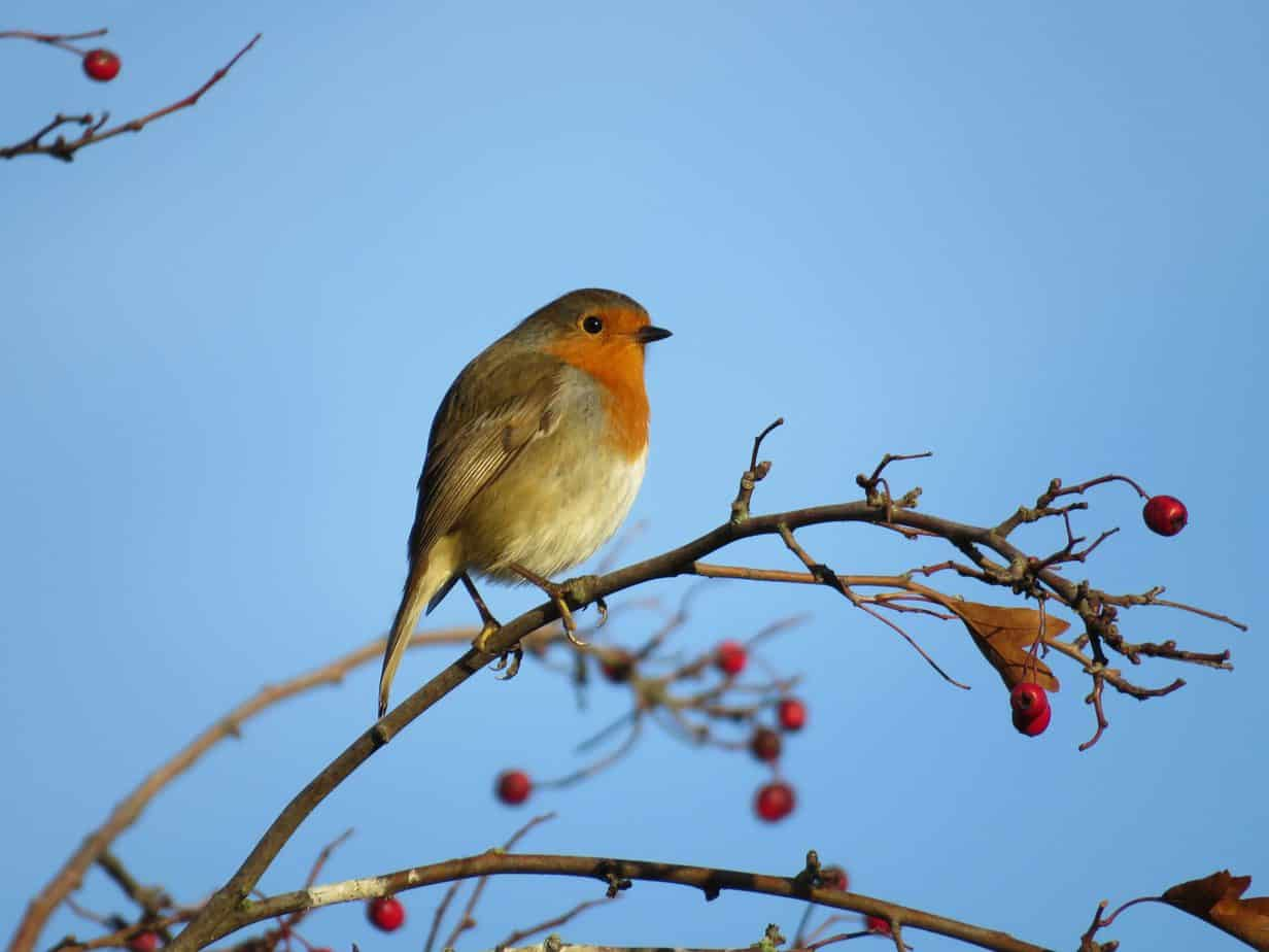 How to Encourage Birds to Your Garden