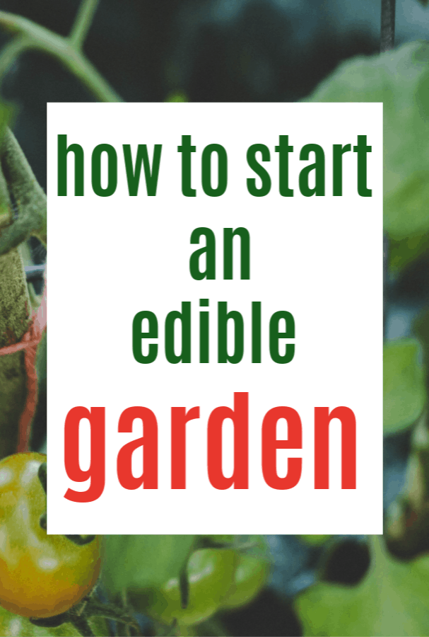 The Growing Trend of Edible Gardens