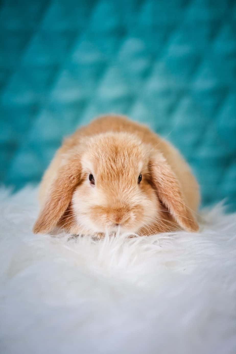 Why You Should Bring a Rabbit into Your Family Home