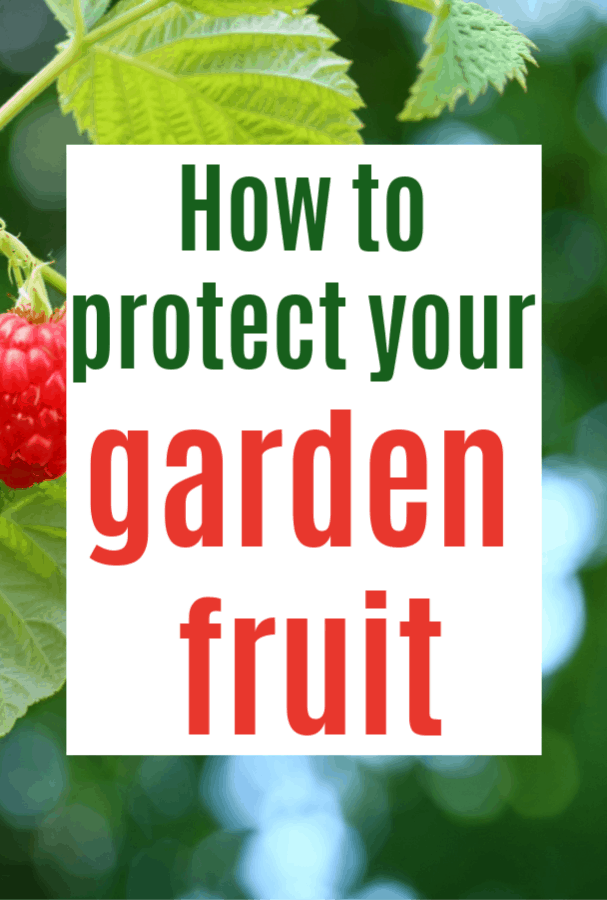 How to Protect Fruit You Grow in Your Garden