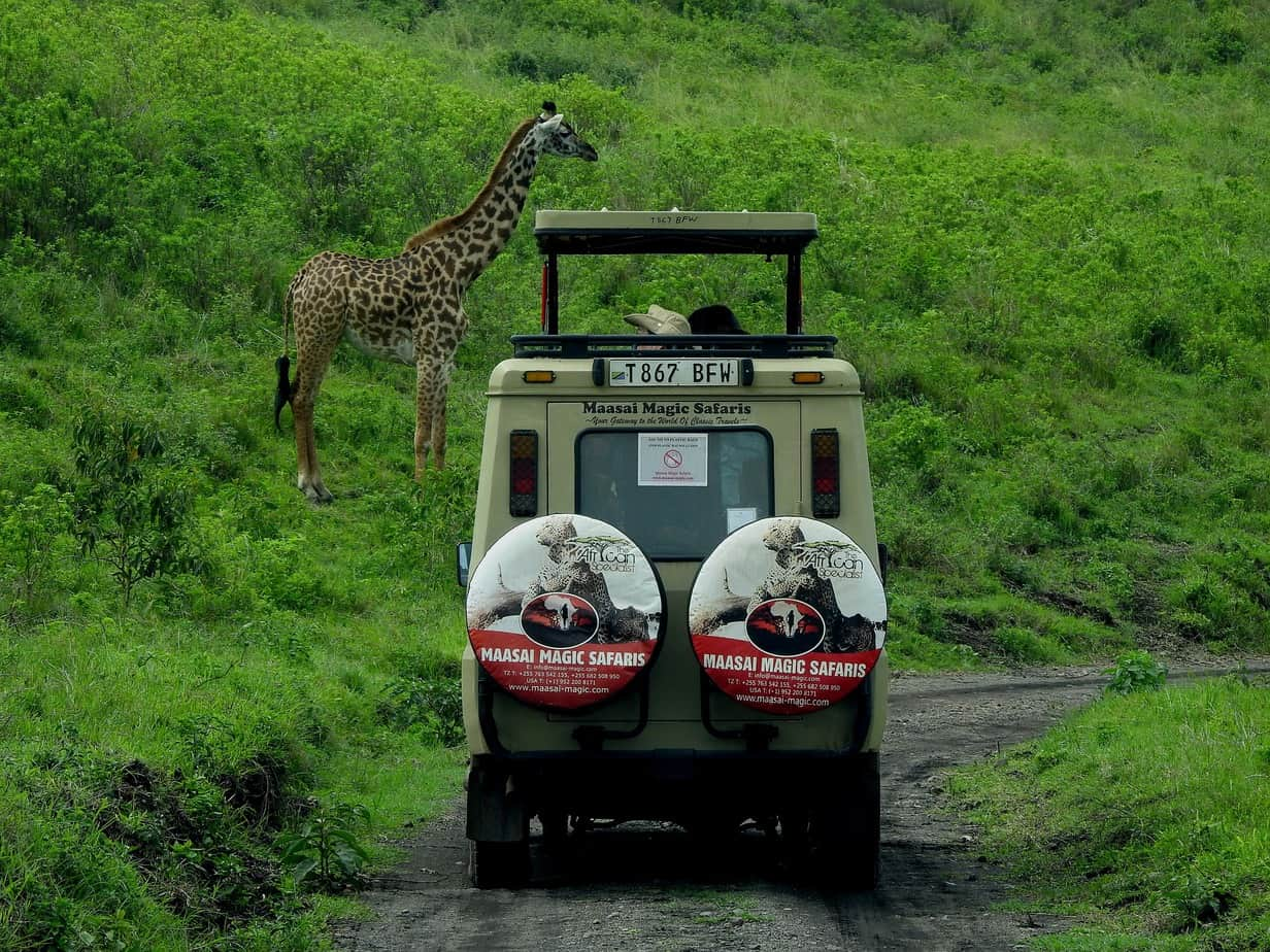 Pack For Your First Safari Adventure