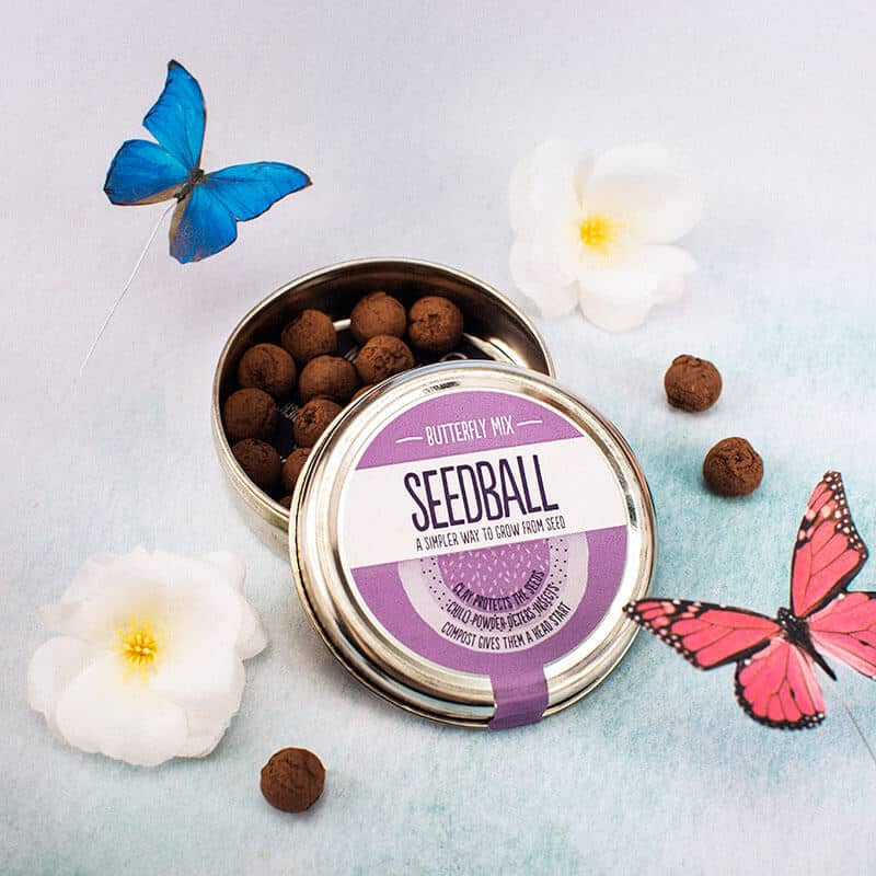 Win a tin of butterfly seedballs