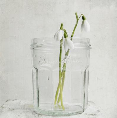 snowdrop jam jar